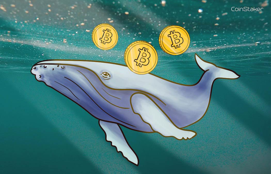 bitcoin_whales.jpg
